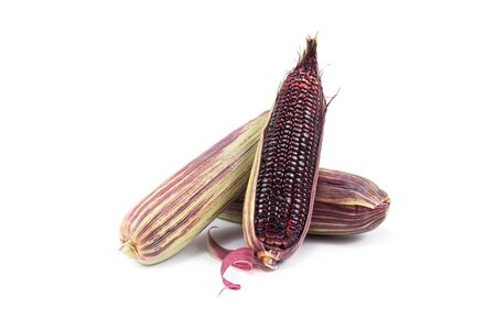 Red sweet corn or Siam Ruby Queen can be eaten fresh isolated on a white background. Select focus.