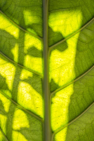 Close-up of green leaf straight stalk at middle beautiful from background and natural texture. Standard-Bild