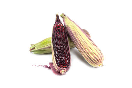 Red sweet corn or Siam Ruby Queen can be eaten fresh isolated on a white background.