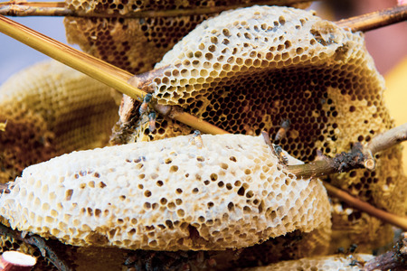 Wild honeycombs and bees, fresh honey from wild bees Banco de Imagens