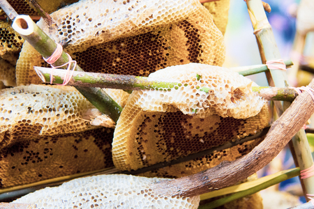 Wild honeycombs and bees, fresh honey from wild bees Imagens