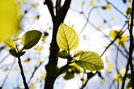 Branch with young green leaves in spring