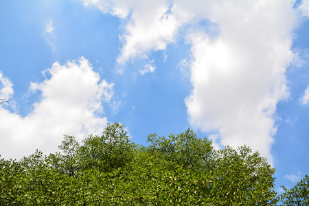 green leaf with Cloud blue sky background