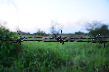 fil de fer: Barbed wire fence with blurred image of field Banque d'images