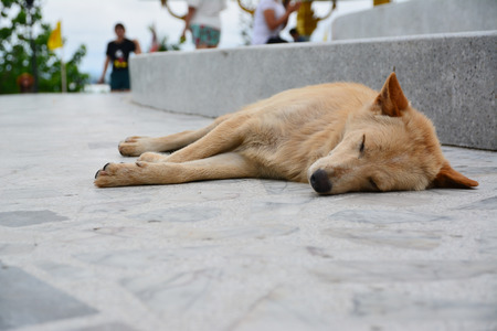 A homeless dog lying on the floor. Stock Photo