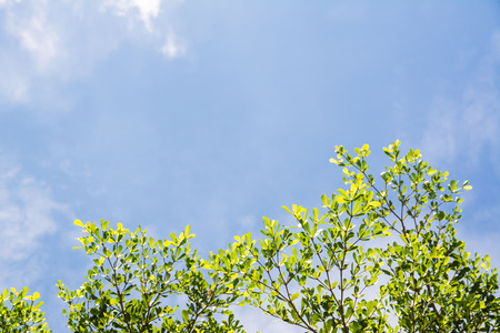 Green Leaf and blue sky background
