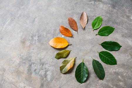 Cambia il concetto di stagione foglie verdi per asciugare le foglie su sfondo di cemento
