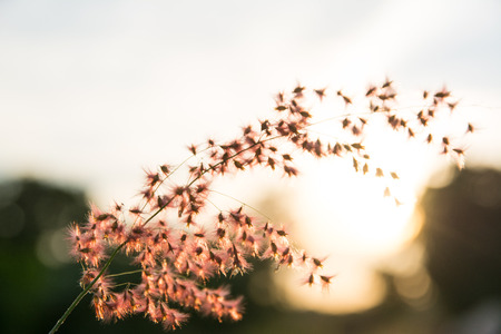 Flower grass at sunset selective focus background