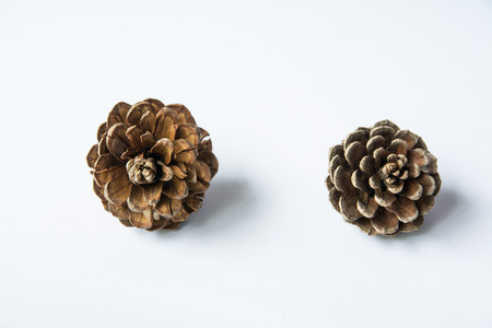 Pine cones on white background for Christmas Concept
