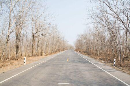 Asphalt road in Autumn forest Reklamní fotografie