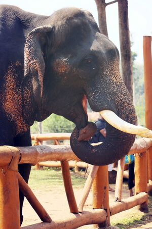 The expression of this elephant resembles that of an amazed cute smiling elephant