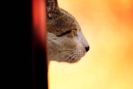 Cat with steady but furious look peeking from behind wall