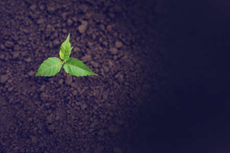 Growing Plant on earth at agriculture field Imagens