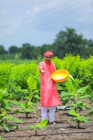 Indian farmer spreading fertilizer in the green banana field