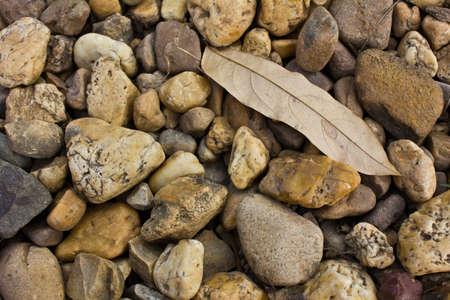 Dry leaf on stone background photo