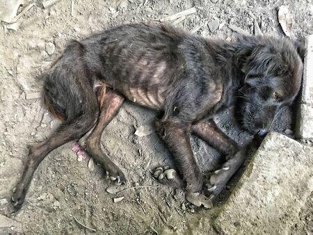 stray black dog, laying on dirty ground