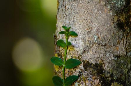 creeping plant: creeping plant