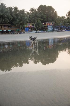konkan: Palolem Beach, Goa, India