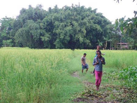 assam: Majuli Island, Assam