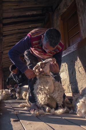 Sheep Rearing in Chakrata Uttarakhand