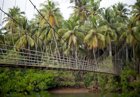 flyover: beautiful view of hanging bridge in a tropical landscape