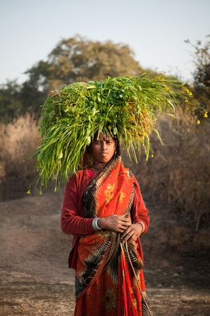 poverty india: Indian happy villager woman carrying green grass home for their livestock