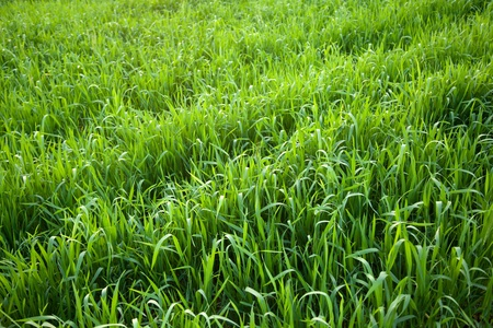 Abstract green grass background in sunlight photo