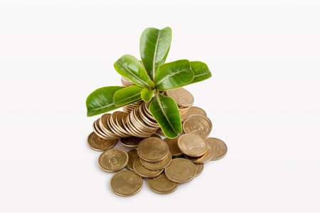 Pile of money  indian coin   isolated on white background under tree or plant Stock Photo - 14306472