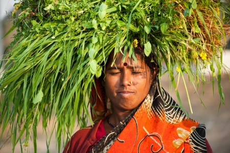 Indian happy villager woman carrying green grass home for their livestock photo