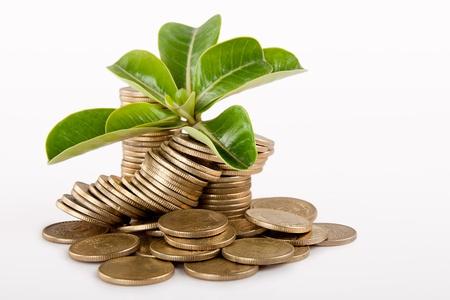 contabilidad financiera cuentas: Pila de acu�ar moneda ind�gena aislado en fondo blanco bajo un �rbol o una planta Foto de archivo
