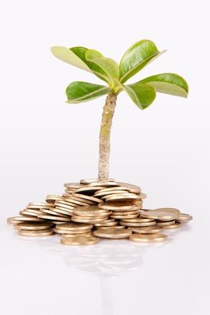 under the tree: Pila de acu�ar moneda ind�gena aislado en fondo blanco bajo un �rbol o una planta Foto de archivo