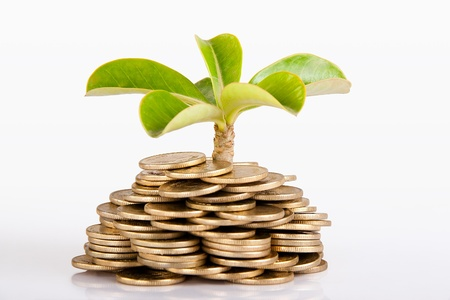 Pile of money  indian coin   isolated on white background under tree or plant photo