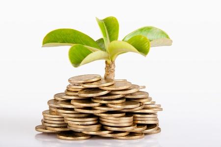 Stapel van geld Indiase munt op een witte achtergrond onder boom of plant Stockfoto