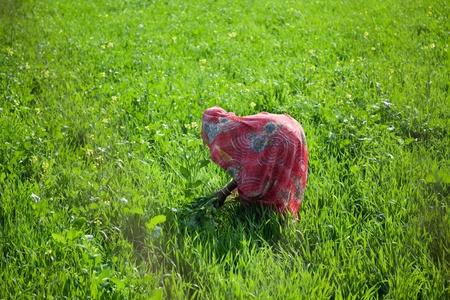 agriculturist: Indian women work at farmland
