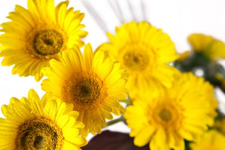Bouquet of yellow flowers on white background photo