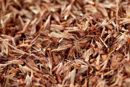 Close up and Collection of dry palmarosa grass seeds (Cymbopogon martinii).