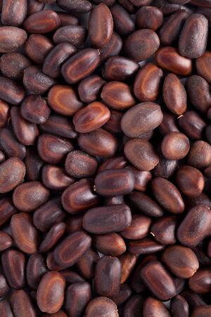 samanea saman: Collection of Albizia saman or samanea saman rain tree seeds