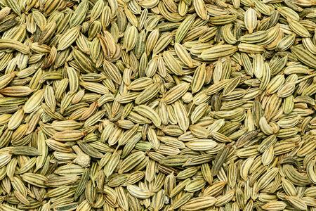 foeniculum vulgare: Collection of dry fennel (Foeniculum vulgare) seed