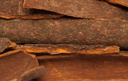 cinnamon bark: Collection of Cinnamomum camphora or Cinnamon bark Stock Photo