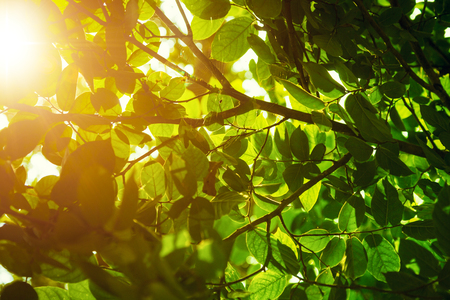 non urban scene: Close up of green leaves glowing under sunlight Stock Photo