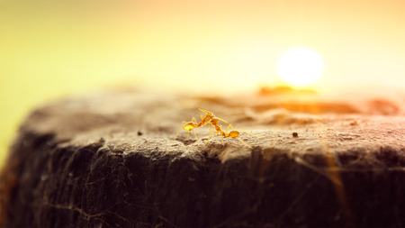 making love: Cerca de dos hormigas que hacen el amor en la roca en la ma�ana Foto de archivo