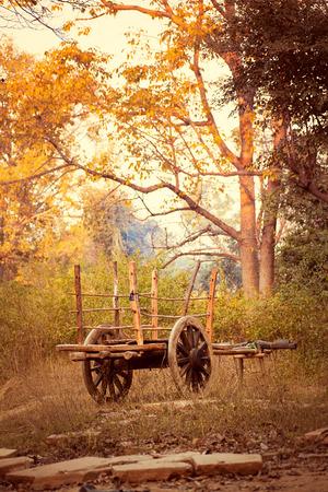 bullock: Beautiful view of old bullock cart in the countryside