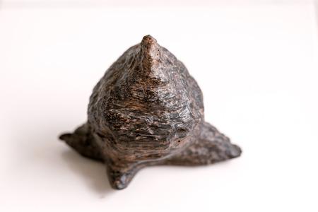 duramen: Duramen resinosa 100 años antiguo de madera de agar.