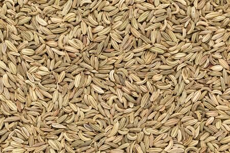 vulgare: Organic Fennel seed Foeniculum Vulgare closeup background texture. Stock Photo