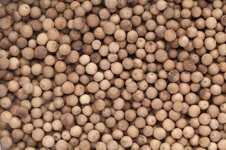 piperaceae: Organic White Pepper Piper nigrum closeup background texture.