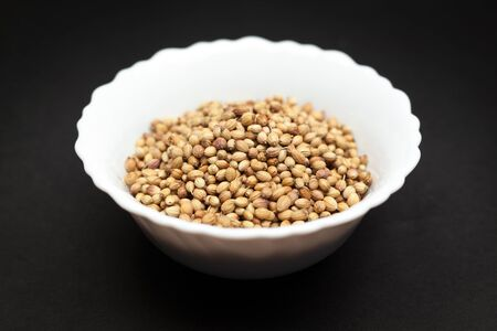 coriandrum sativum: Organic Dried coriander seeds Coriandrum sativum in white ceramic bowl on dark background. Stock Photo