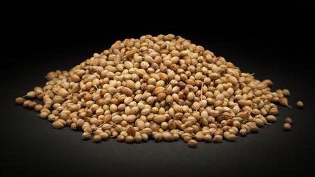coriandrum sativum: Pile of Organic Dried coriander seeds Coriandrum sativum on dark background.