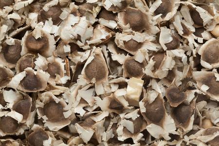 oleifera: Organic Dried Moringa (Moringa oleifera) Seeds. Macro close up background texture. Top view.