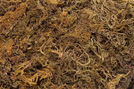 commune: Organic Dried Moss Grass (Polytrichum commune). Macro closeup background texture.
