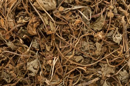 asiatica: Organic Indian Pennywort or gotu kola (Centella asiatica). Macro close up background texture. Top view.